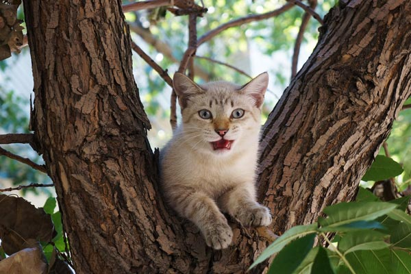 Cat on a tree!