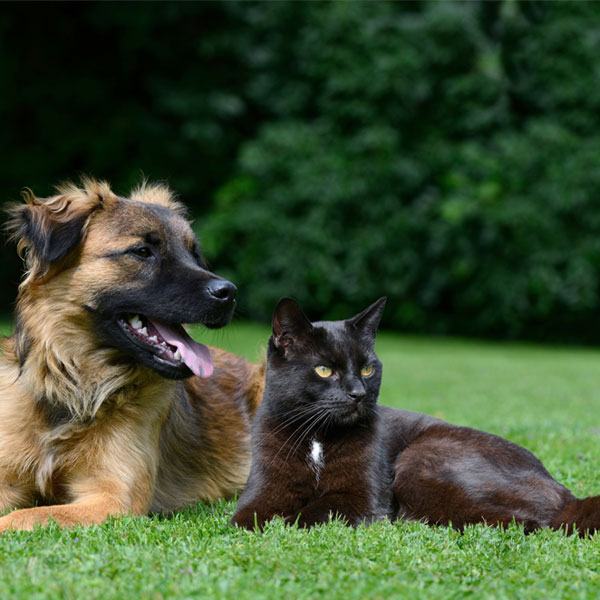 Dog and cat lying on meadow